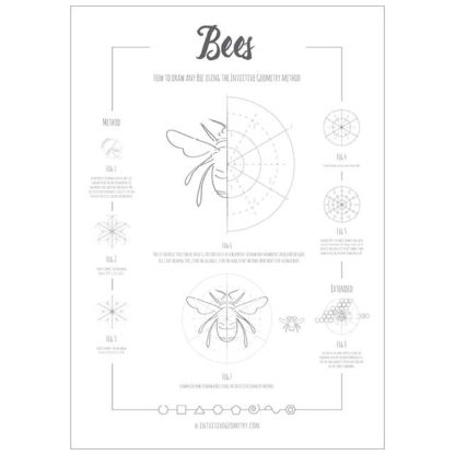 How to draw any bee Poster