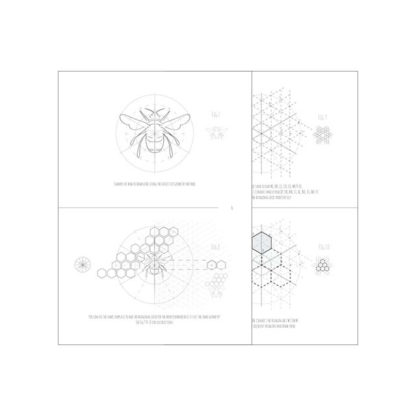 How to draw any bee Workbook 3
