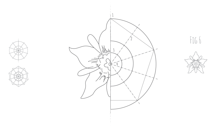How to draw any 5 fold flower Fig 6