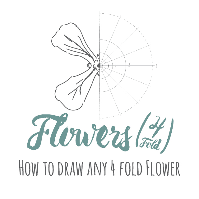 How to draw any 4 fold flower instructions link