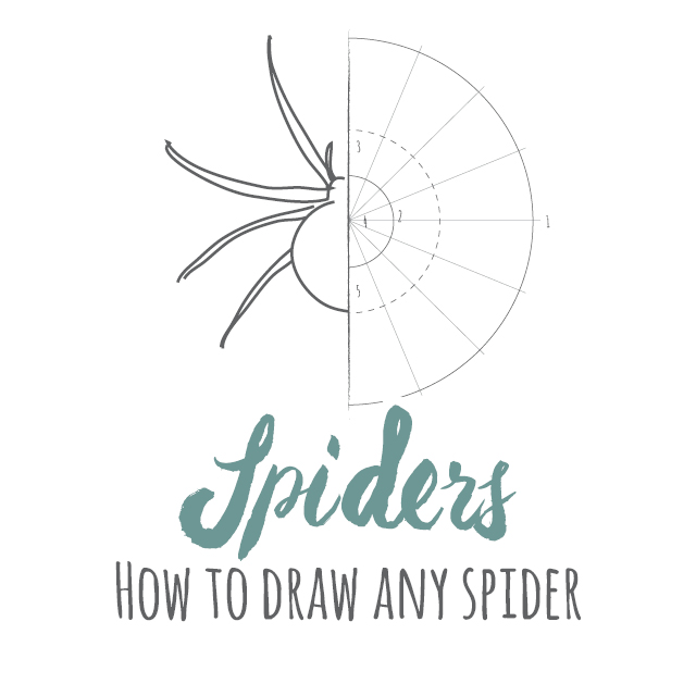 How to draw any spider instructions link