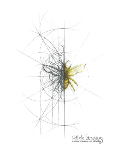 Nathalie Strassburg Intuitive Geometry Bee Art