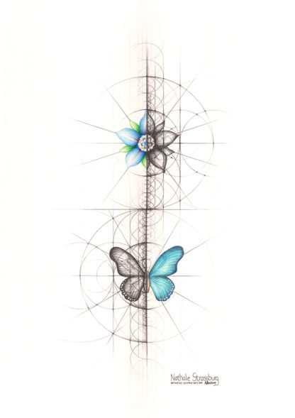 Nathalie Strassburg Intuitive Geometry Butterfly and Flower Art