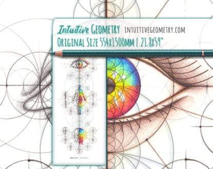 Intuitive Geometry Human Anatomy Series Vertical life size