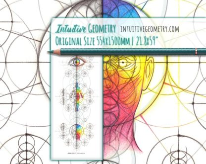 Intuitive Geometry Human Anatomy Series Vertical life size 3